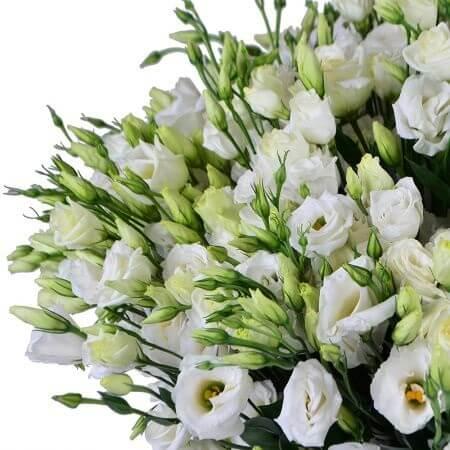 Цветы эустома: фото и выращивание из семян