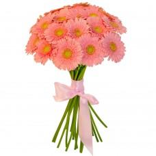 Букет 19 светло-розовых гербер
