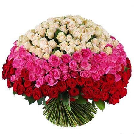 Букет 303 розы трёх цветов