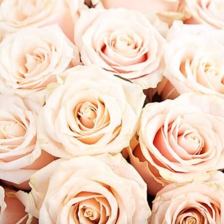 25 роз томск купить