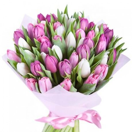 Букет 51 белый и розовый тюльпан