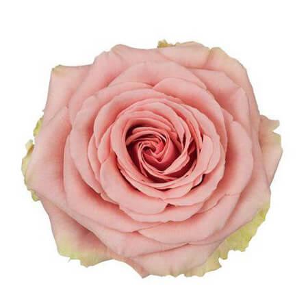 Роза «Geraldine» поштучно
