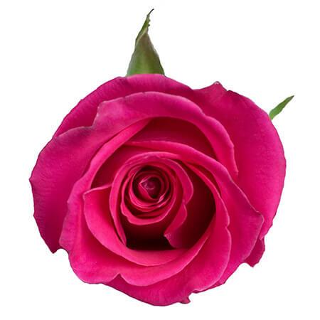 Роза «Topaz» поштучно