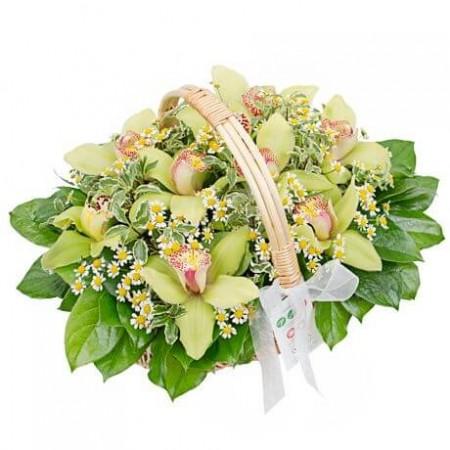 Корзина «Свежие орхидеи»